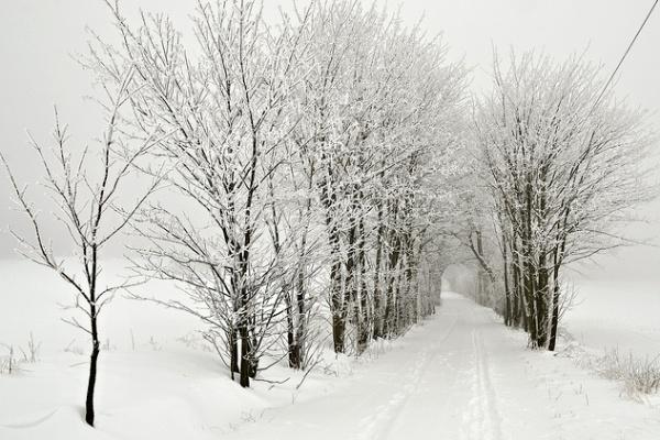Alej u Černých lesů