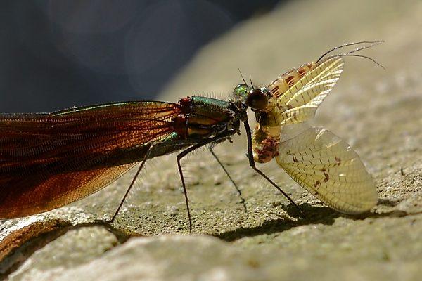 Motýlice při svačince