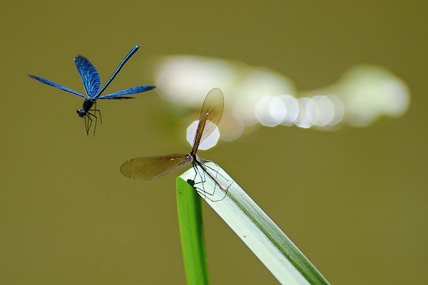Motýlice, letovka