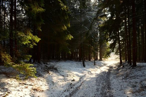 Lesní volumetrie
