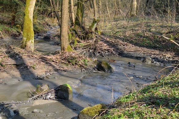 Lavičský potok