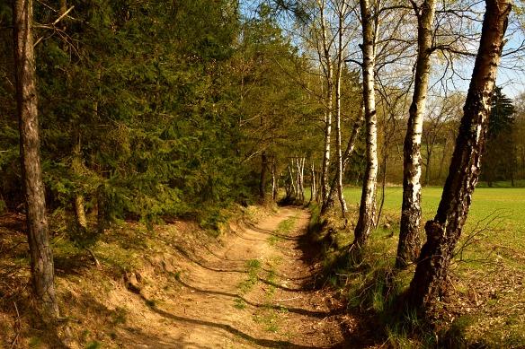 Cestu k potoku lemují břízy