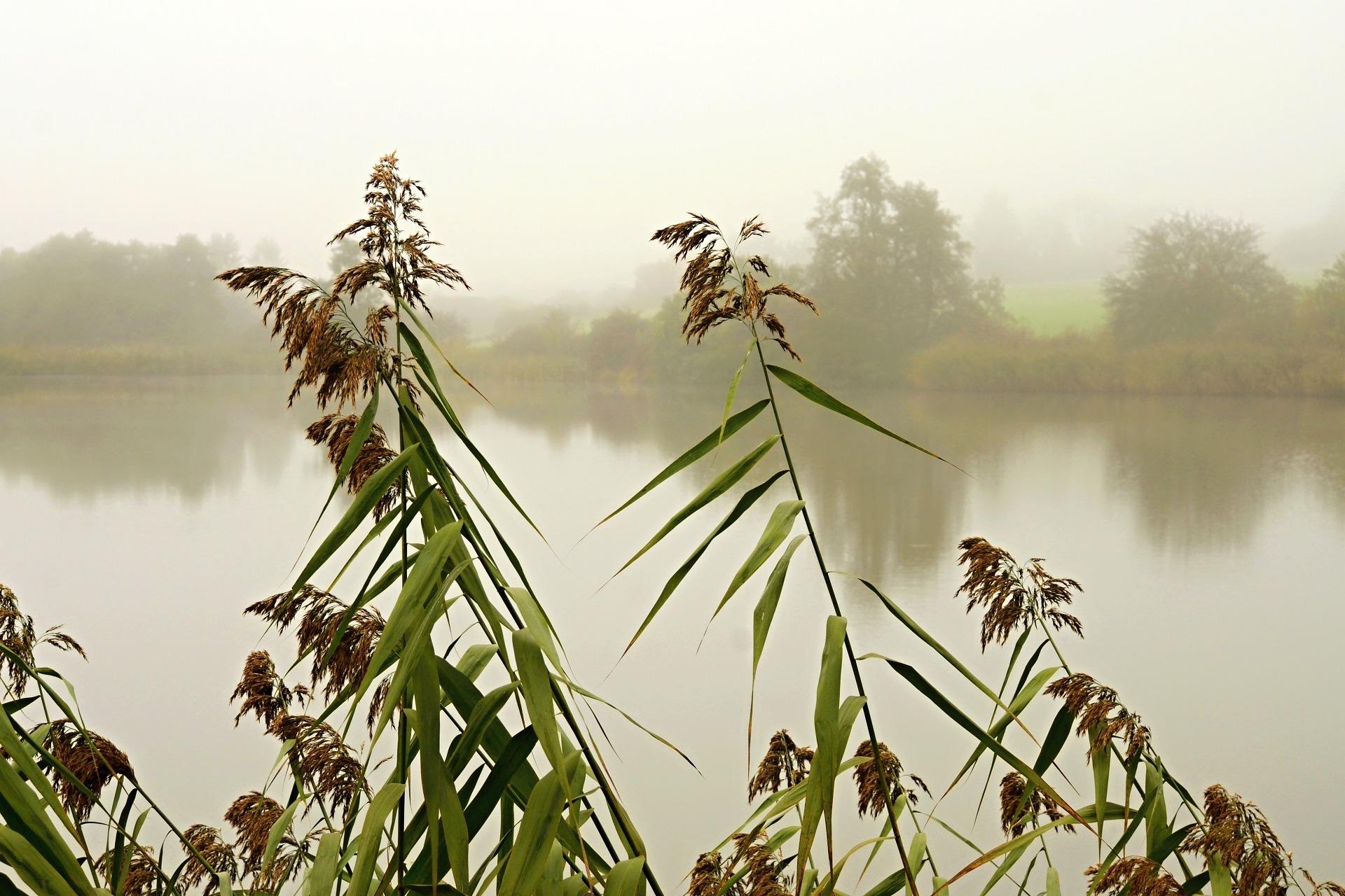 Rybník Utopenec