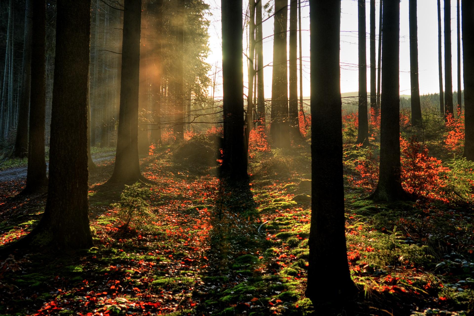 Ranní opar v závěru podzimu
