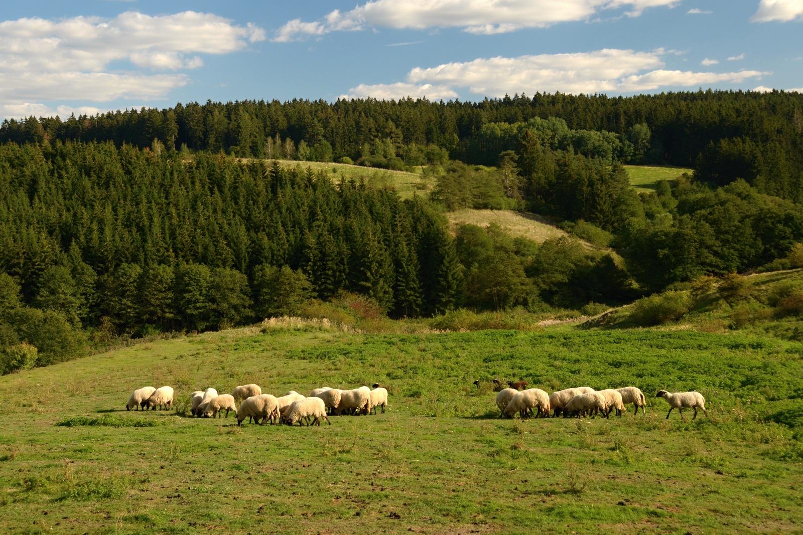 Pastviny za Radonínem