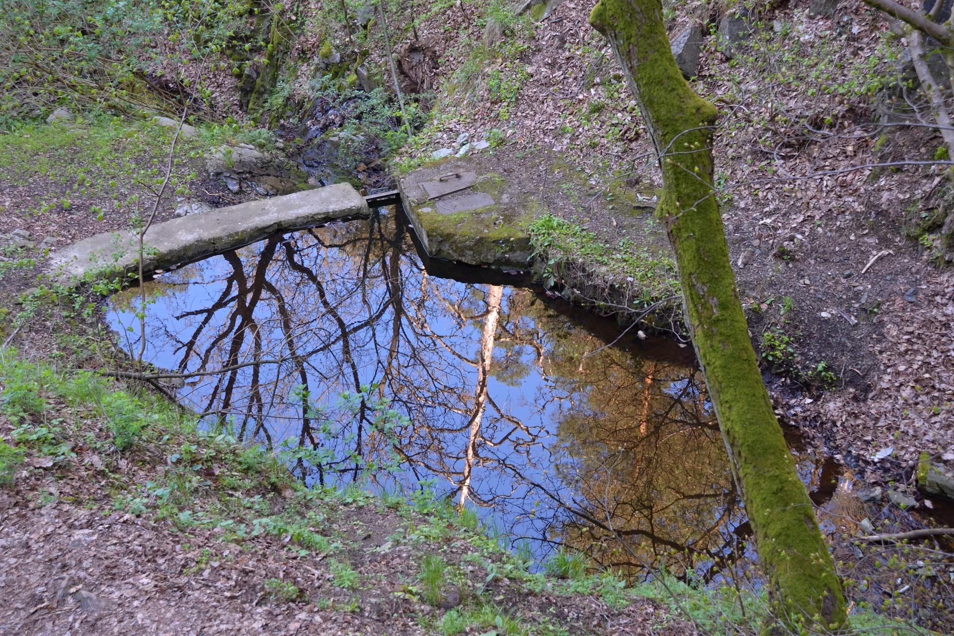 V umělé tůňce se zrcadlí borovice na slunci