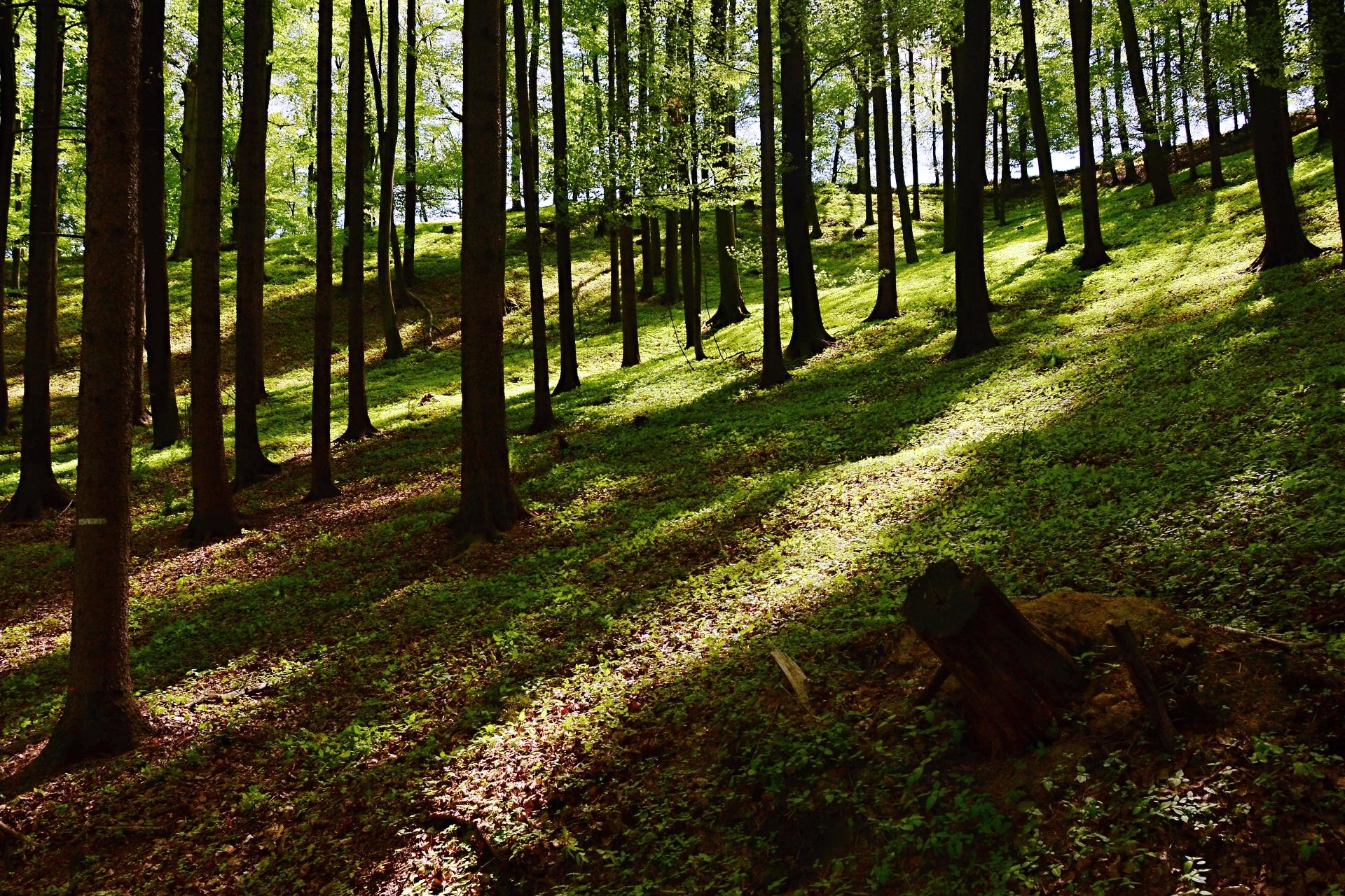 Jarní les nad Skřipinou